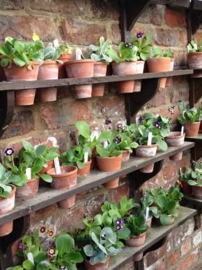 Stokesley Open Gardens